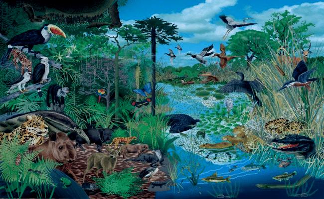 ramas de la ecología