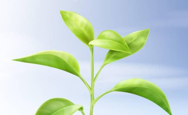 que son los biocombustibles