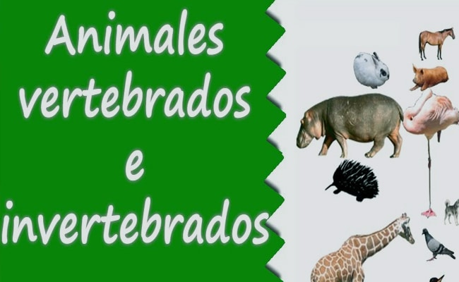 fotos de animales vertebrados