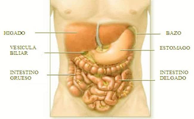 abscesos hepáticos múltiples y que lo causa