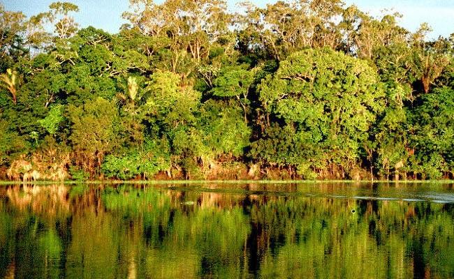 la fauna de la región amazónica