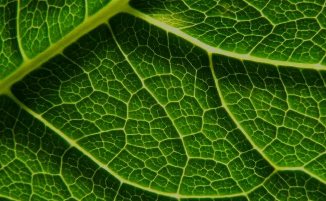 que es la fotosíntesis