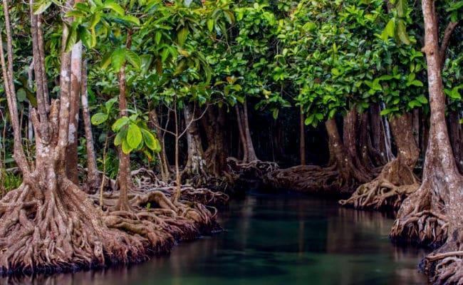 ecosistema léntico y sus características
