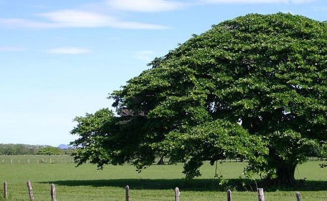 tipos de árboles en España