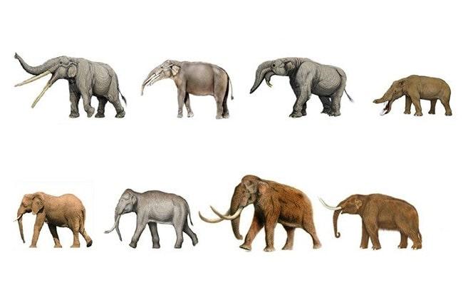teoria de la evolucion darwin