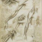 Anatomía de Da Vinci