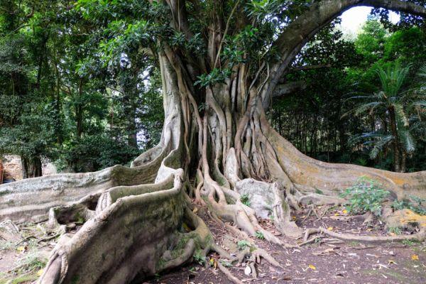 ramas-de-la-ecologia-arbol-raices-istock