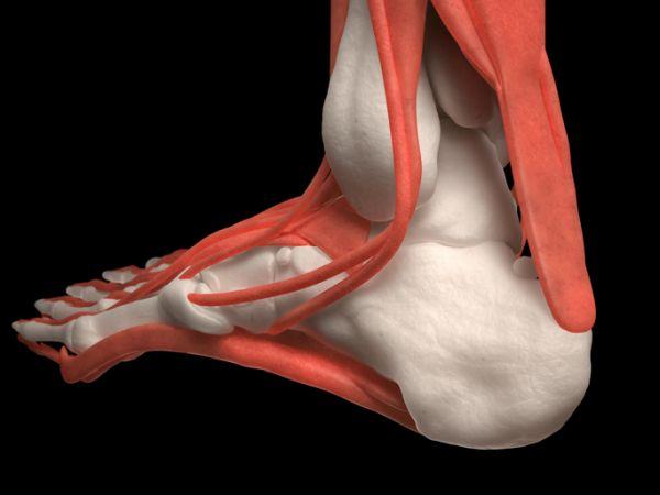 musculos-del-pie-funciones-musculo-istock