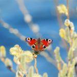 cuales-son-las-partes-del-rinon-mariposa-istock