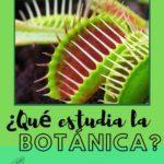 Planta carnívora y pregunta qué estudia la botánica